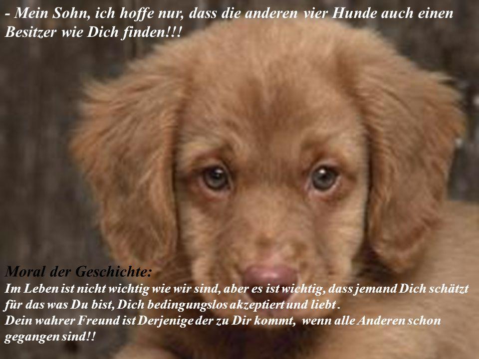 - Mein Sohn, ich hoffe nur, dass die anderen vier Hunde auch einen Besitzer wie Dich finden!!!