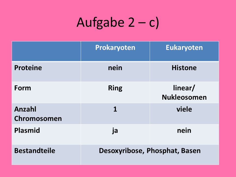 Desoxyribose, Phosphat, Basen