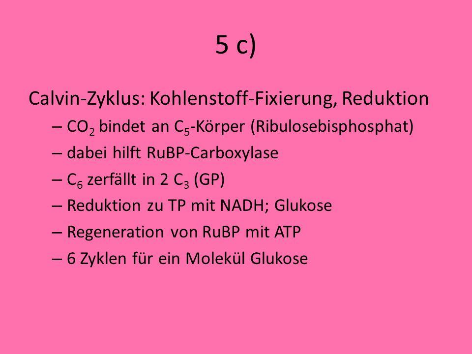 5 c) Calvin-Zyklus: Kohlenstoff-Fixierung, Reduktion