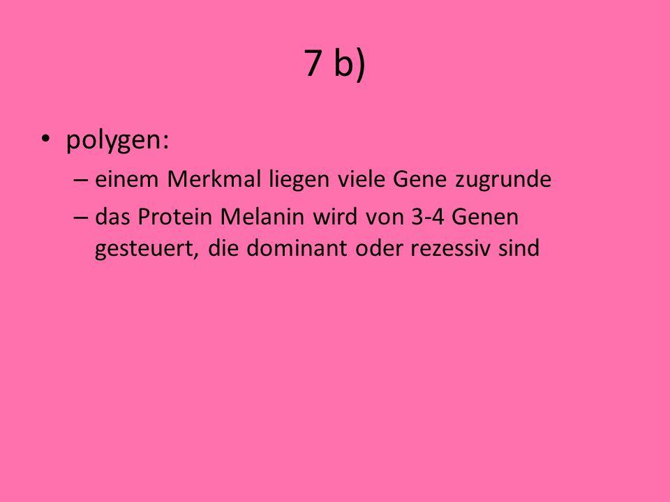 7 b) polygen: einem Merkmal liegen viele Gene zugrunde