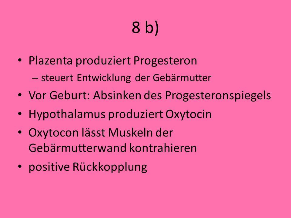 8 b) Plazenta produziert Progesteron