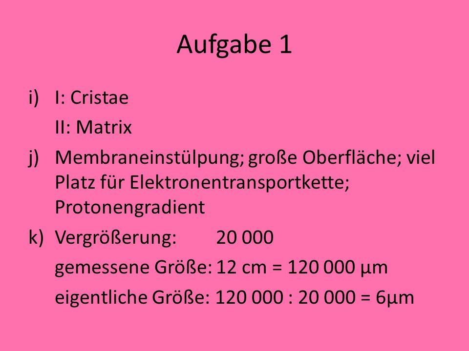 Aufgabe 1 I: Cristae II: Matrix