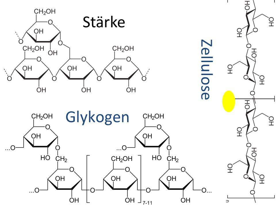 Stärke Zellulose Glykogen