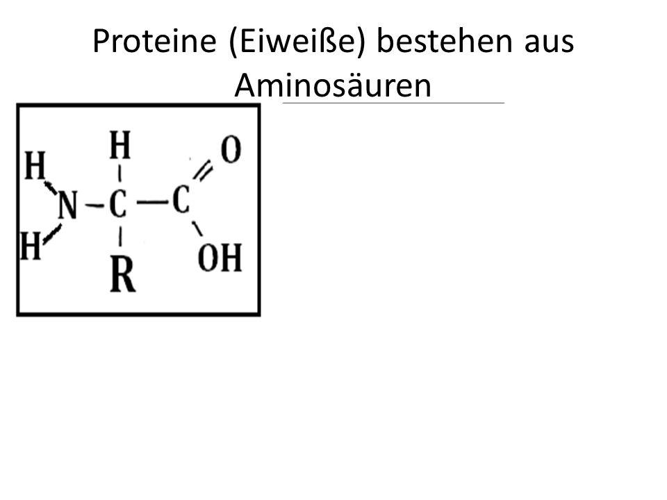 Proteine (Eiweiße) bestehen aus Aminosäuren