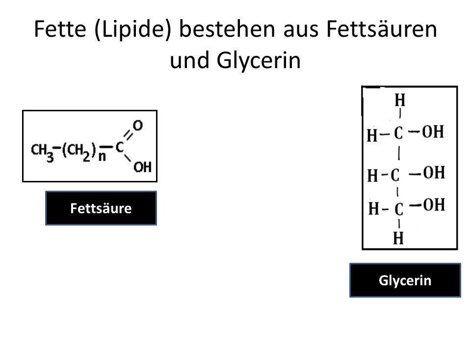 Fette (Lipide) bestehen aus Fettsäuren und Glycerin