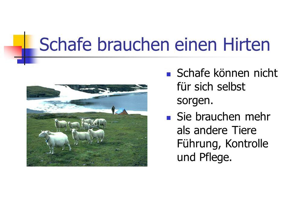 Schafe brauchen einen Hirten