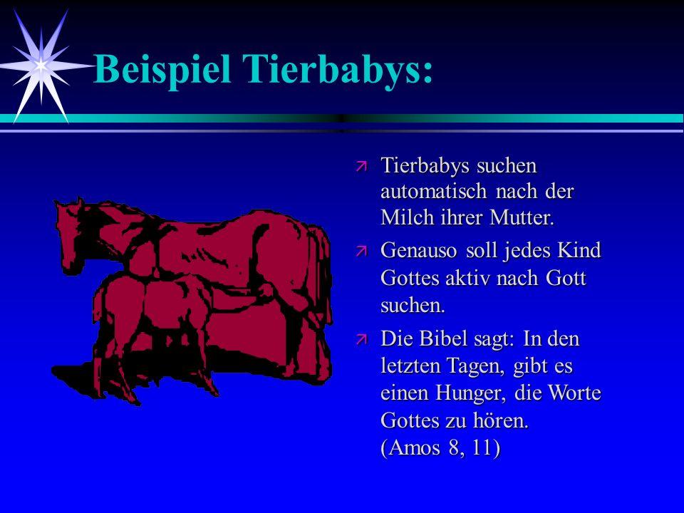 Beispiel Tierbabys: Tierbabys suchen automatisch nach der Milch ihrer Mutter. Genauso soll jedes Kind Gottes aktiv nach Gott suchen.