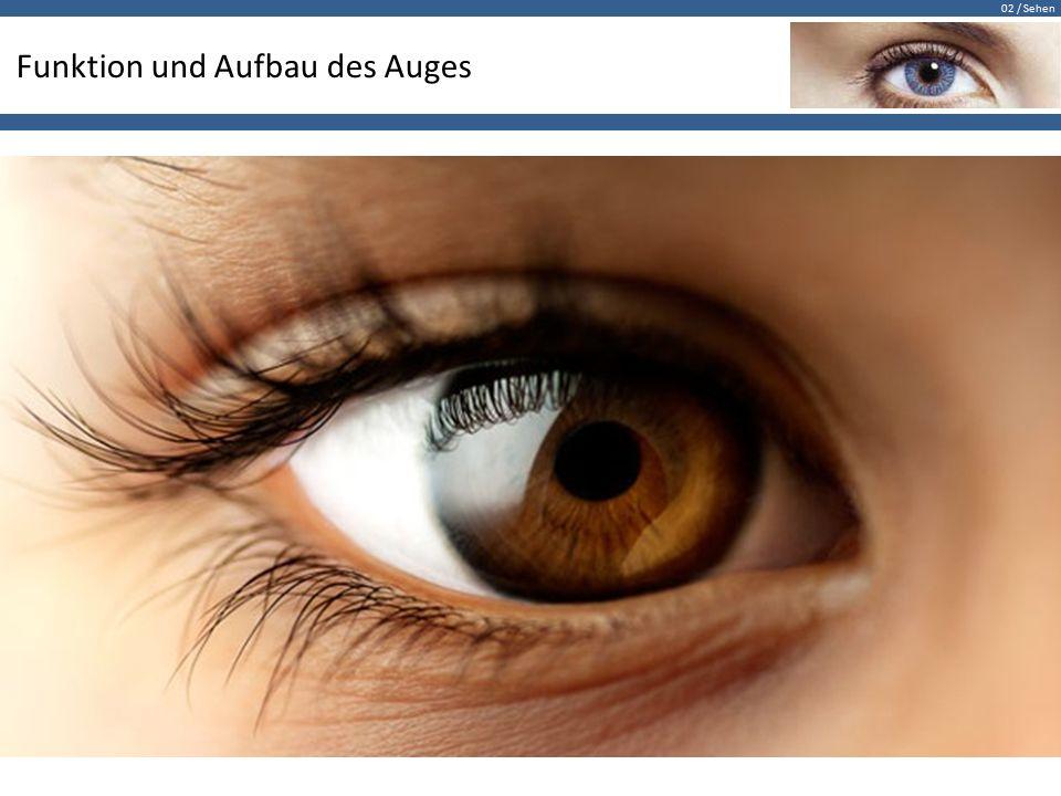 Funktion und Aufbau des Auges