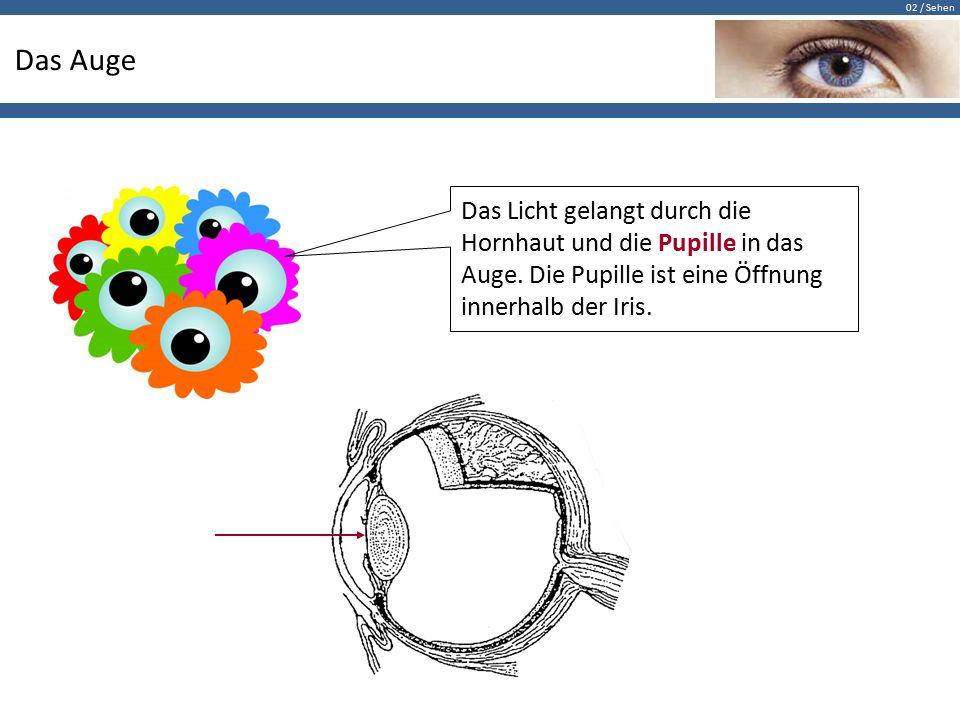 Das Auge Das Licht gelangt durch die Hornhaut und die Pupille in das Auge.