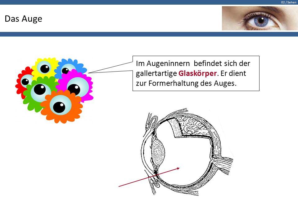 Das Auge Im Augeninnern befindet sich der gallertartige Glaskörper.