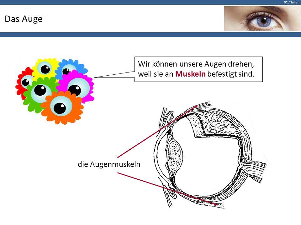 Das Auge Wir können unsere Augen drehen, weil sie an Muskeln befestigt sind. die Augenmuskeln
