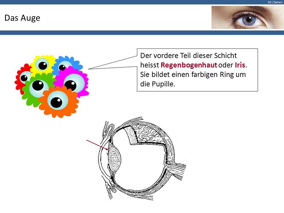 Fantastisch Anatomie Des Auges Ppt Galerie - Anatomie Von ...