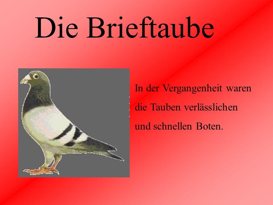 Die Brieftaube In der Vergangenheit waren die Tauben verlässlichen