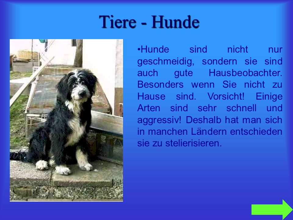 Tiere - Hunde