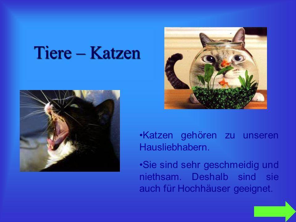 Tiere – Katzen Katzen gehören zu unseren Hausliebhabern.