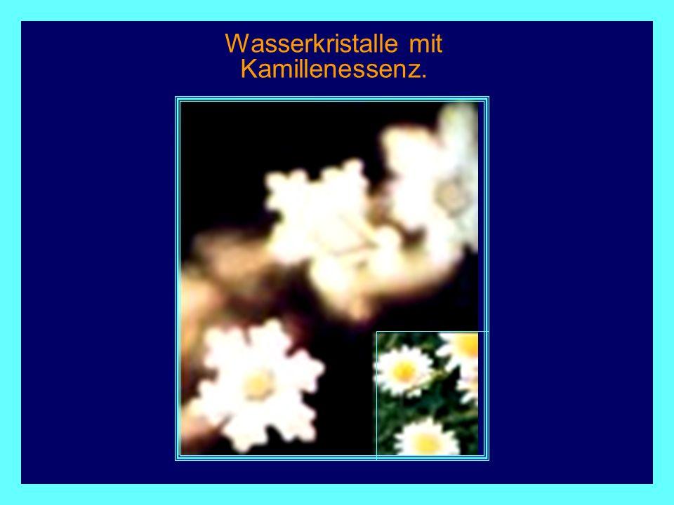 Wasserkristalle mit Kamillenessenz.
