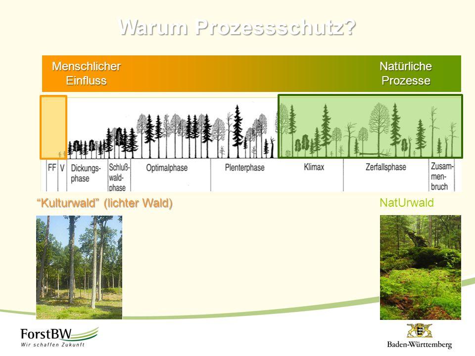 Warum Prozessschutz Menschlicher Einfluss Natürliche Prozesse