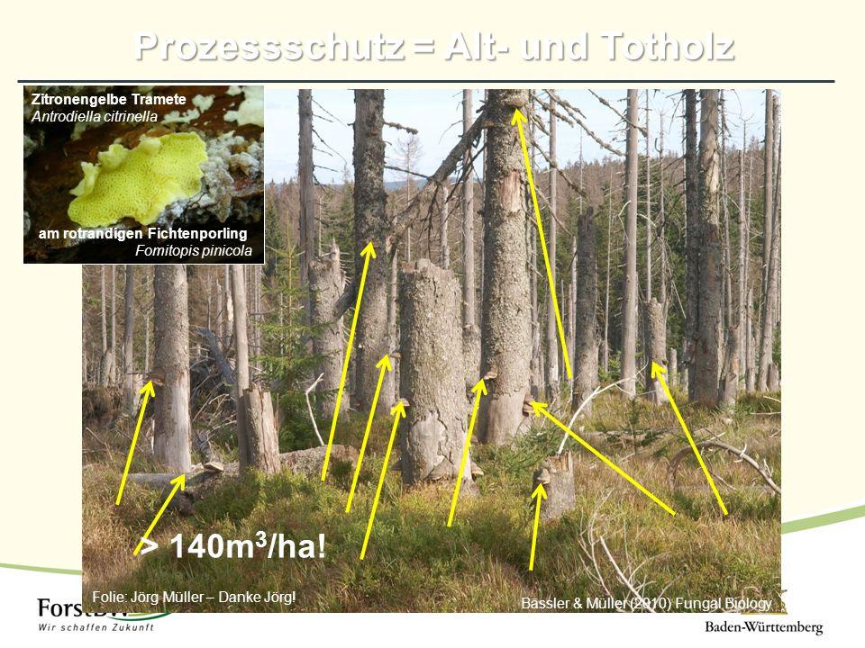 Prozessschutz = Alt- und Totholz