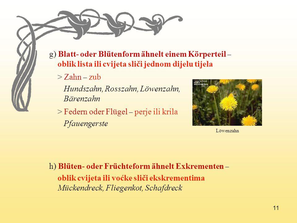 g) Blatt- oder Blütenform ähnelt einem Körperteil –