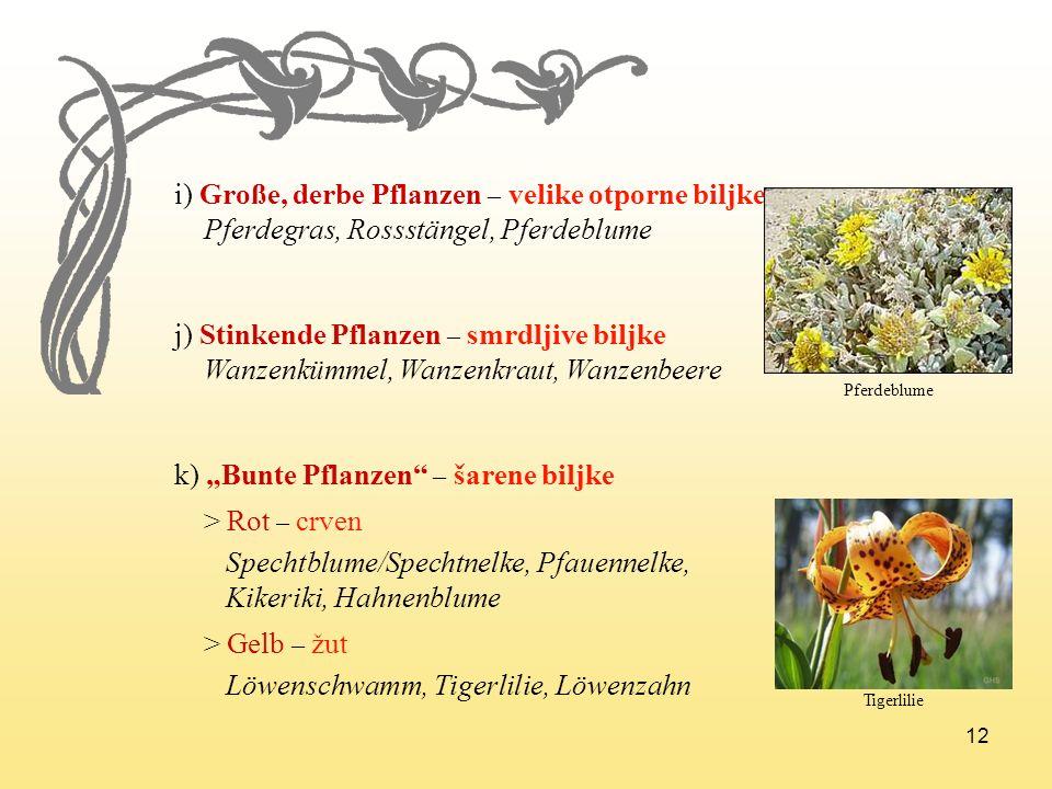 i) Große, derbe Pflanzen – velike otporne biljke
