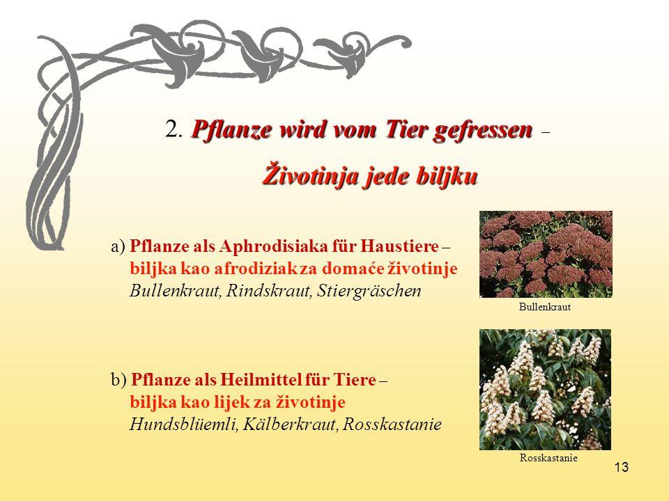 2. Pflanze wird vom Tier gefressen –