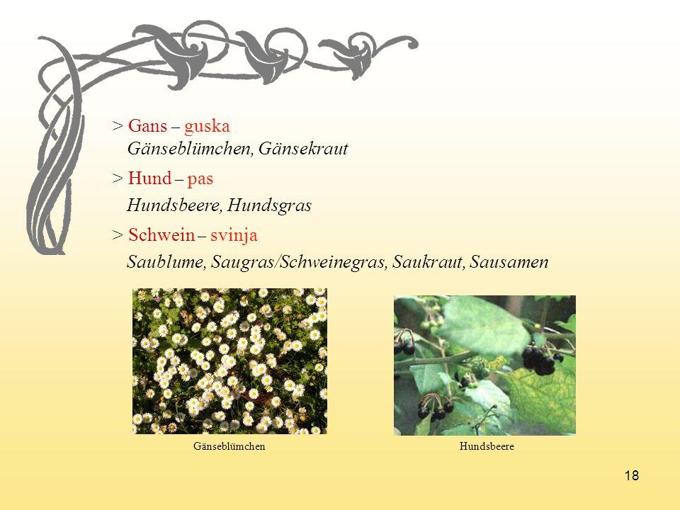 Gänseblümchen, Gänsekraut > Hund – pas Hundsbeere, Hundsgras