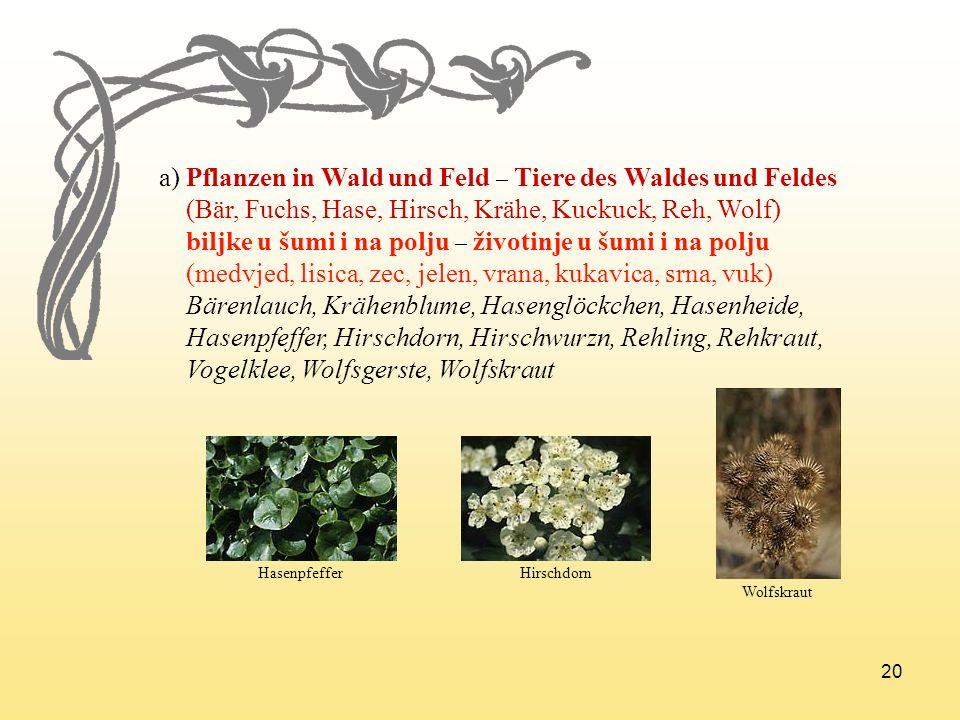 a) Pflanzen in Wald und Feld – Tiere des Waldes und Feldes