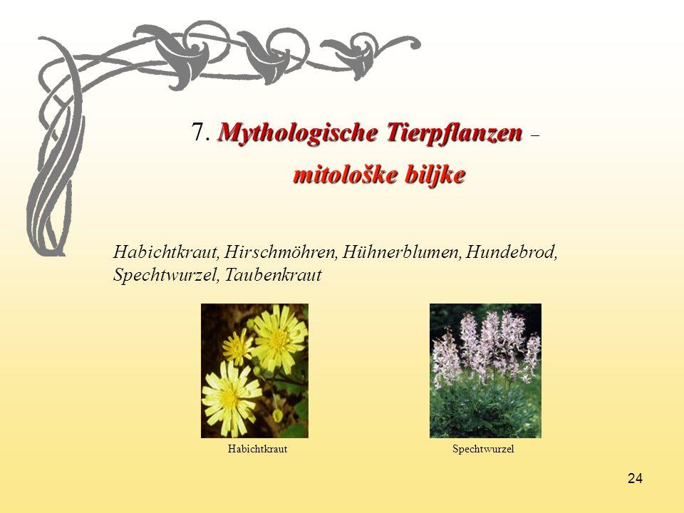 7. Mythologische Tierpflanzen –