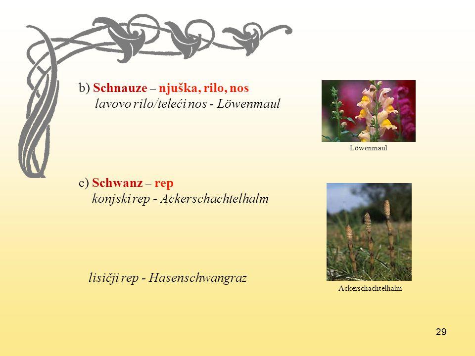 b) Schnauze – njuška, rilo, nos lavovo rilo/teleći nos - Löwenmaul