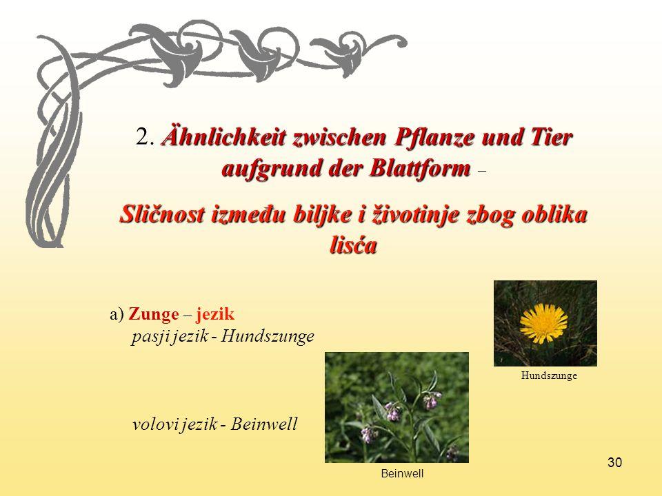 Sličnost između biljke i životinje zbog oblika lisća