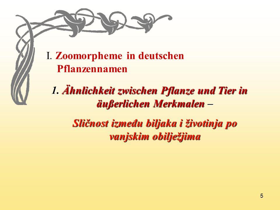 I. Zoomorpheme in deutschen Pflanzennamen