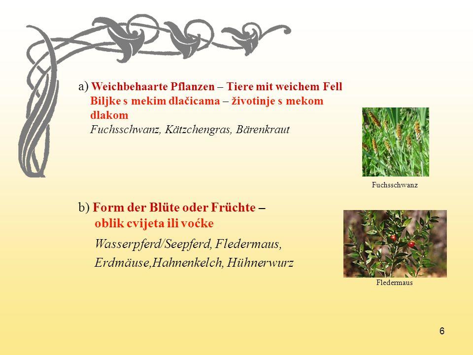 a) Weichbehaarte Pflanzen – Tiere mit weichem Fell