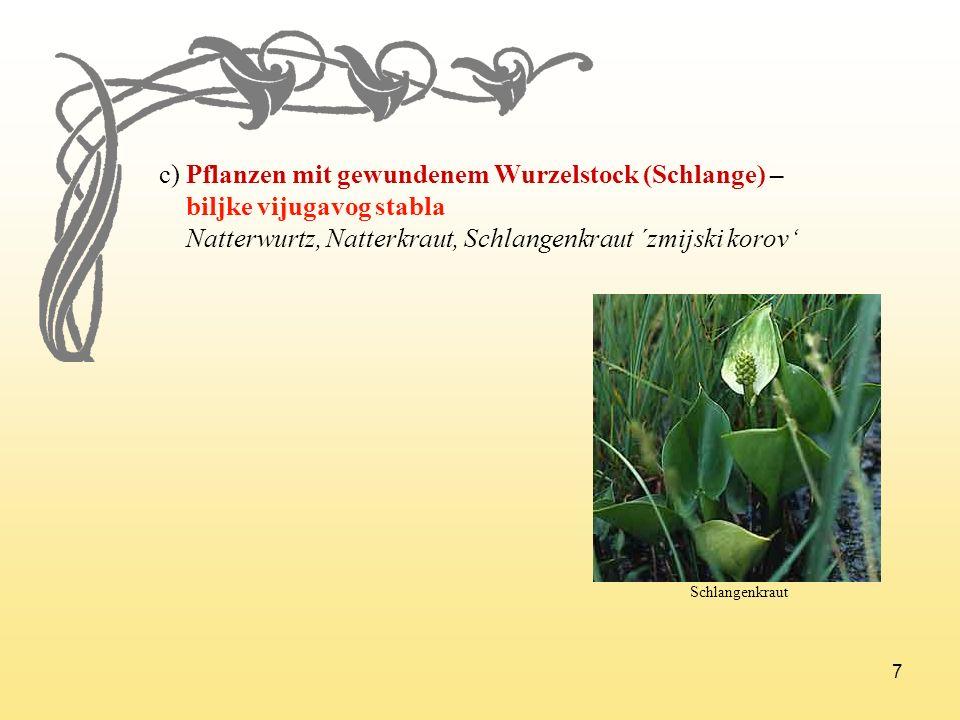 c) Pflanzen mit gewundenem Wurzelstock (Schlange) –