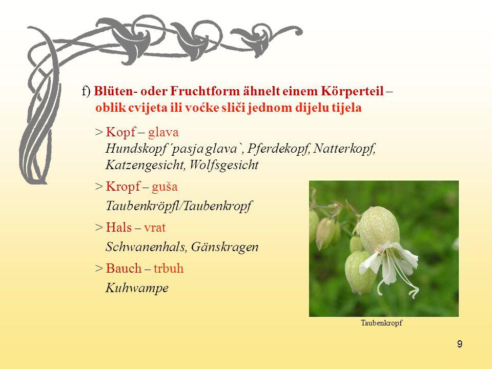 f) Blüten- oder Fruchtform ähnelt einem Körperteil –