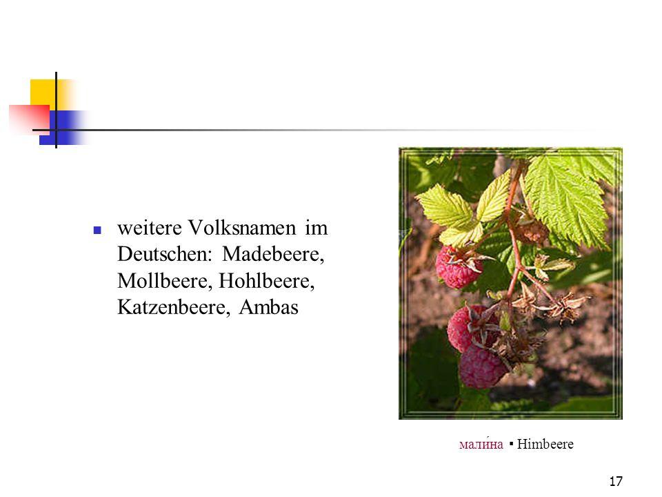 weitere Volksnamen im Deutschen: Madebeere, Mollbeere, Hohlbeere, Katzenbeere, Ambas