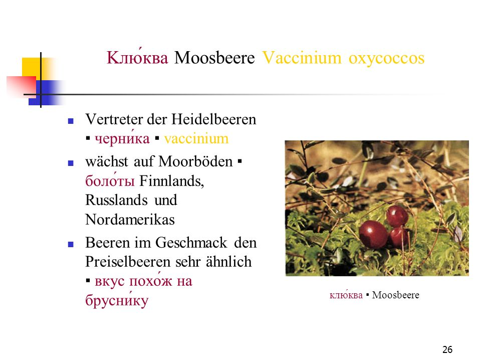 Kлю́ква Moosbeere Vaccinium oxycoccos