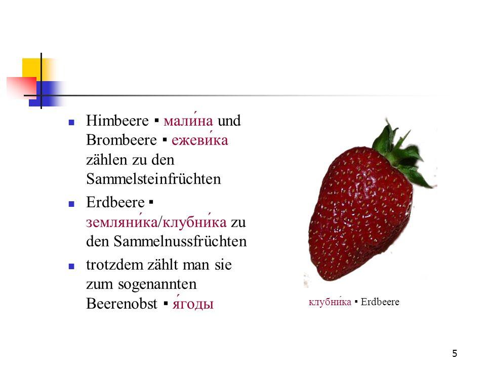 Erdbeere ▪ земляни́ка/клубни́ка zu den Sammelnussfrüchten