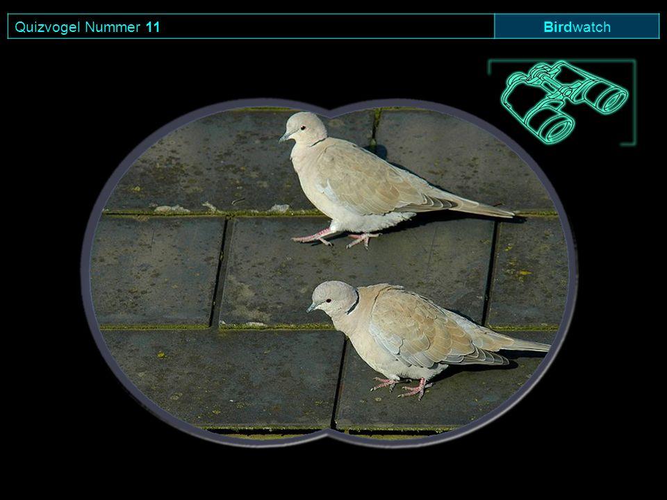 Quizvogel Nummer 11 Birdwatch