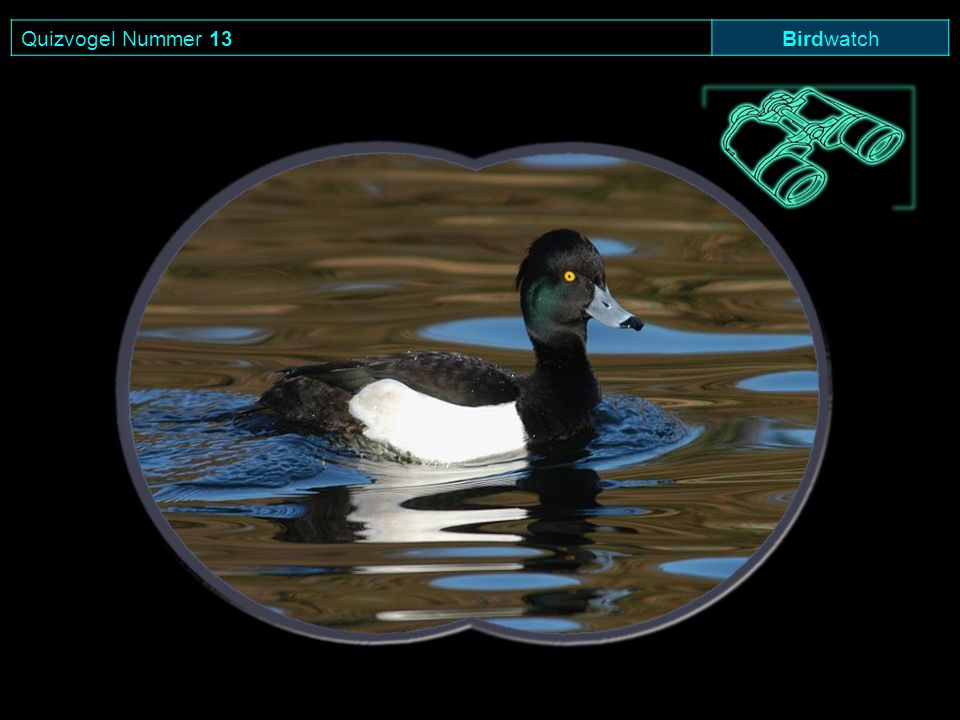 Quizvogel Nummer 13 Birdwatch