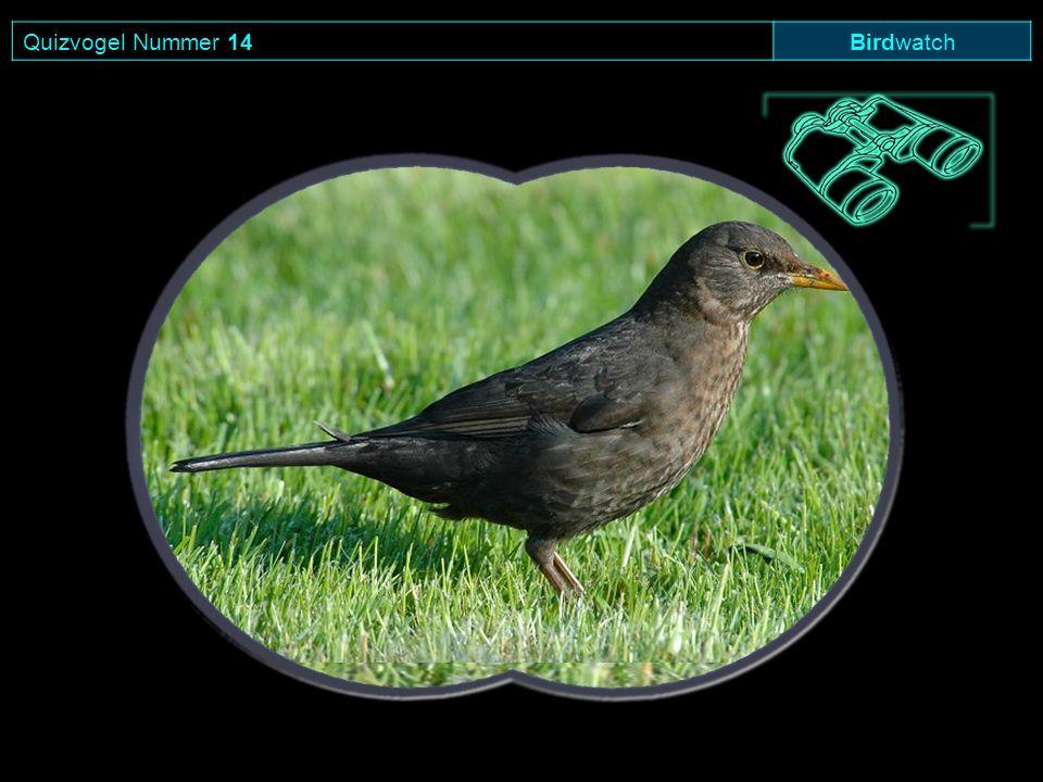 Quizvogel Nummer 14 Birdwatch