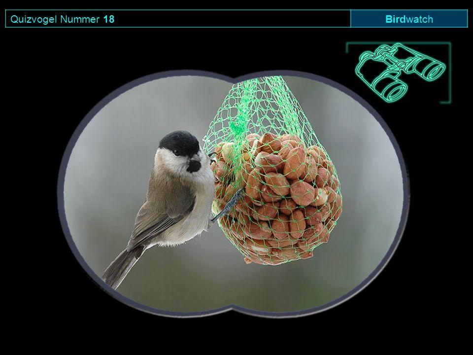 Quizvogel Nummer 18 Birdwatch