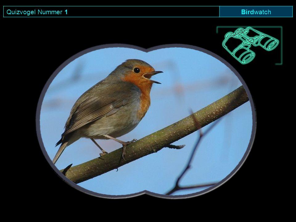 Quizvogel Nummer 1 Birdwatch