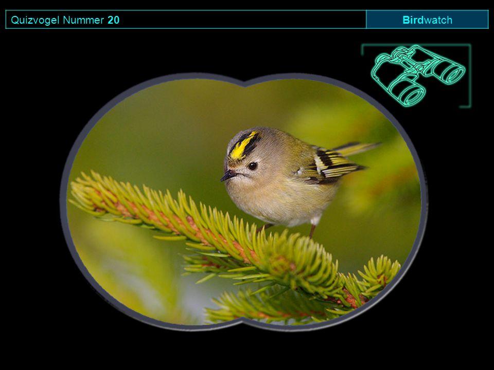 Quizvogel Nummer 20 Birdwatch