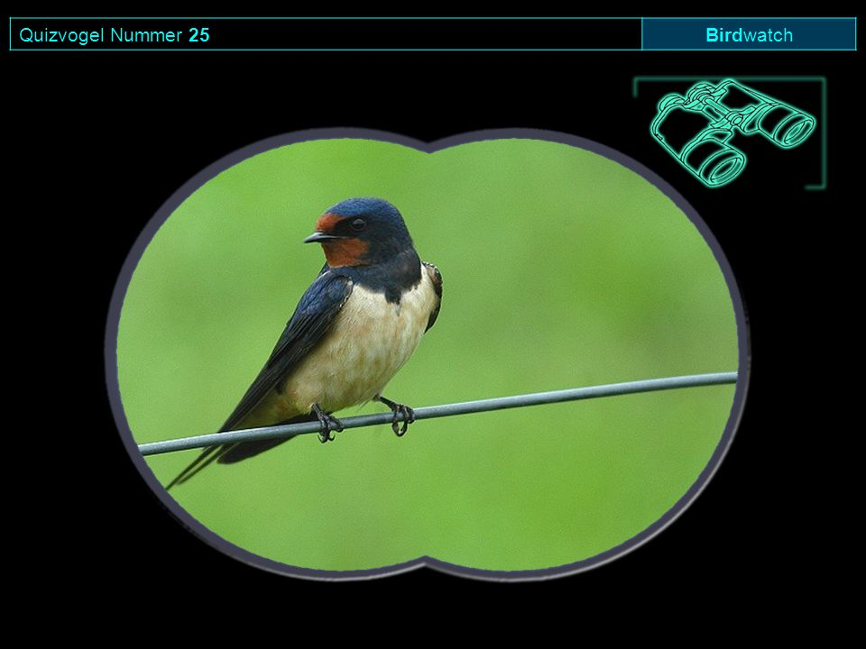 Quizvogel Nummer 25 Birdwatch