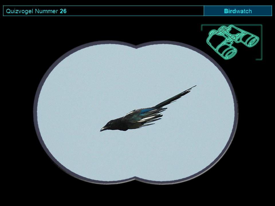 Quizvogel Nummer 26 Birdwatch
