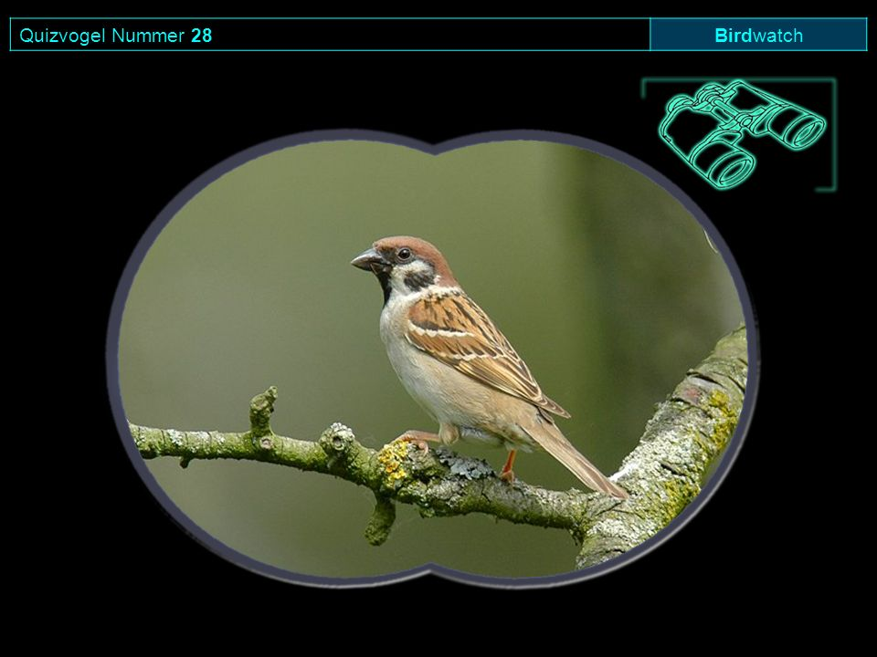 Quizvogel Nummer 28 Birdwatch