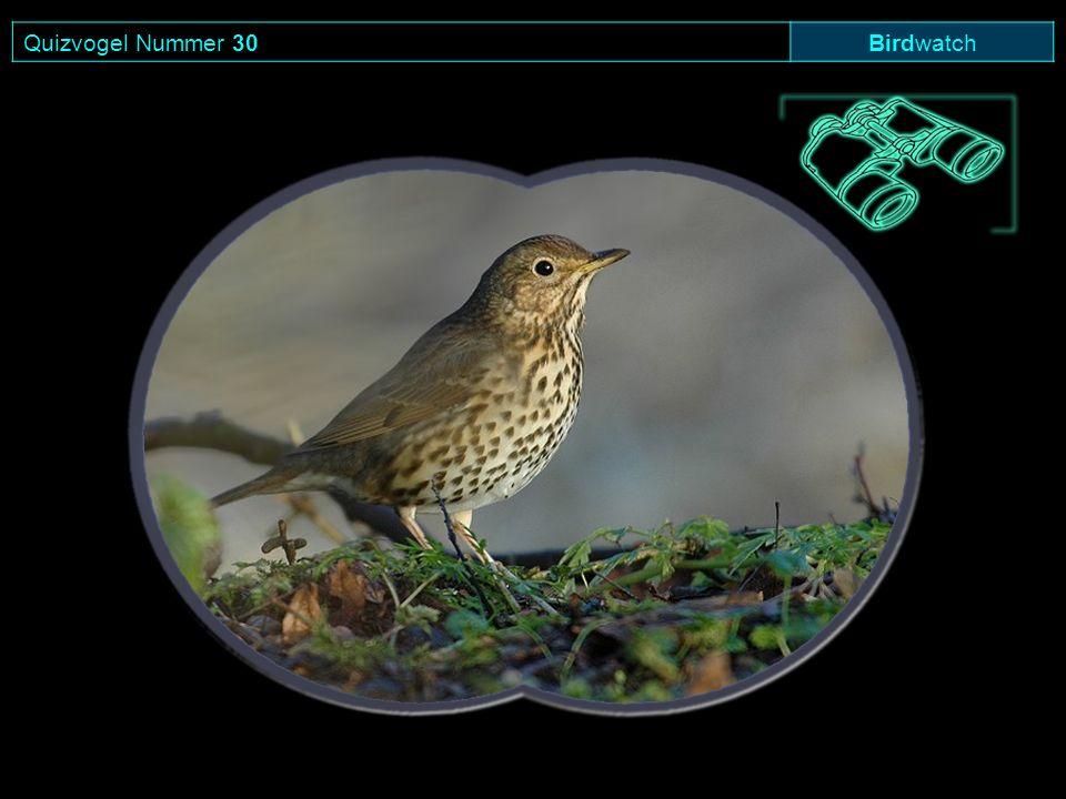 Quizvogel Nummer 30 Birdwatch