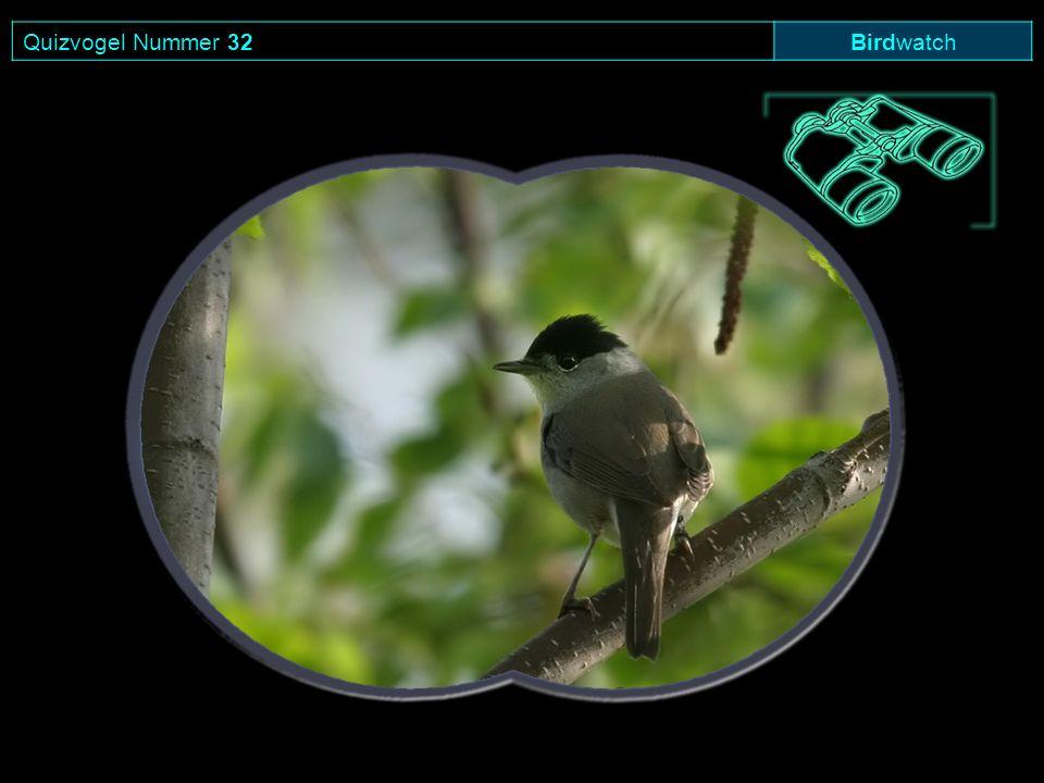 Quizvogel Nummer 32 Birdwatch