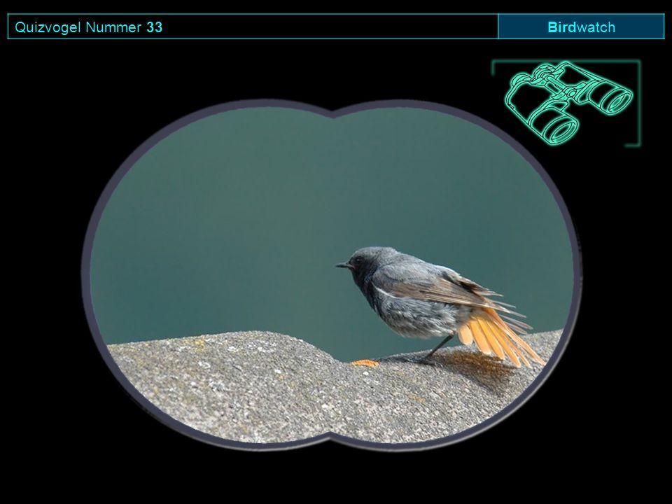 Quizvogel Nummer 33 Birdwatch