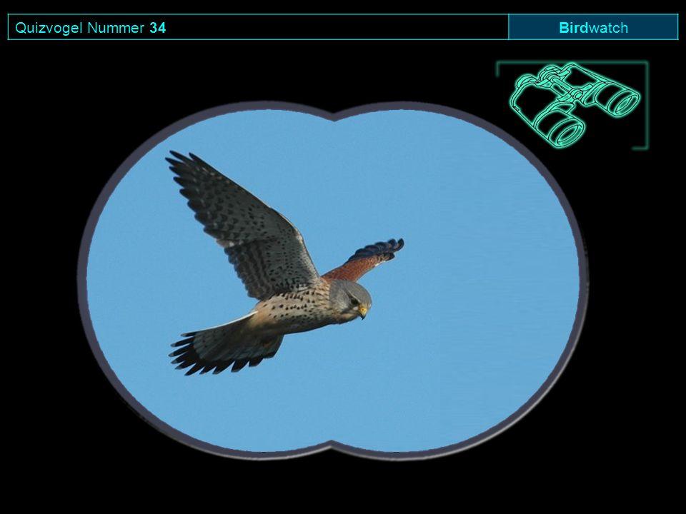 Quizvogel Nummer 34 Birdwatch